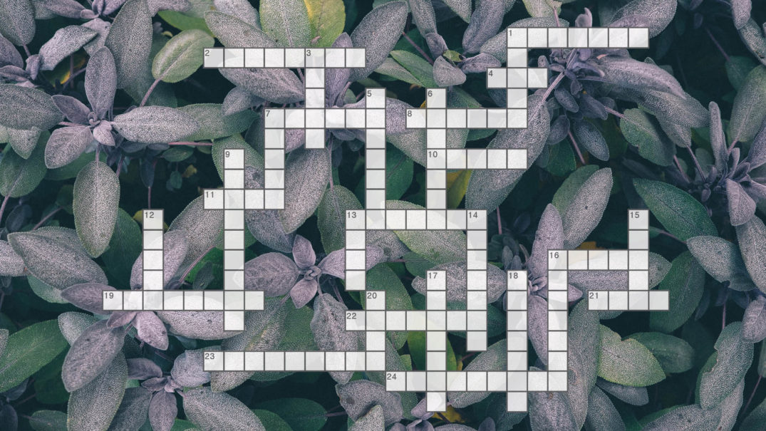 Crossword-Summer-2018-fit815-Magazine-FitMe-Wellness-Rockford-Gym